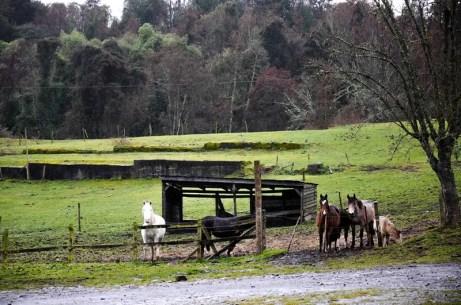 Parque Nacional, na região de Puyehue, no Chile (Crédito: Wanderley Mattos Jr / DT)