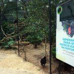 Parque das Aves traz espécies em extinção para perto de visitantes