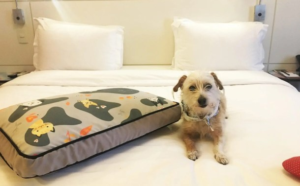 Intercity Hotels aposta em mercado Pet Friendly
