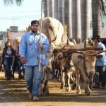 Fez um ano: Festa religiosa reúne milhares de turistas de um dia em Trindade (GO)