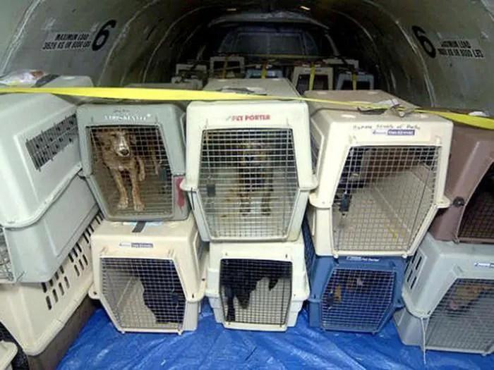 Empresa aérea condenada por morte de animal durante voo