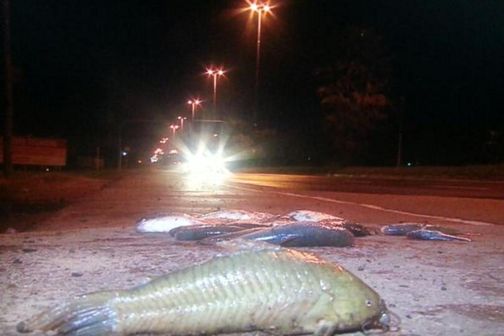 Água da enchente baixa e peixes são encontrados na Avenida Assis Brasil Reprodução/Twitter @PauloLedur