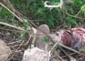 Cadáver fue desmembrado por animales hambrientos