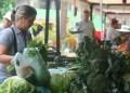 Por un paquete de espinaca, acelga o Celeri puede pagarse unos Bs. 80 cada uno.