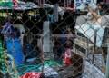 Cientos de perros viven en el refugio de Carrizal