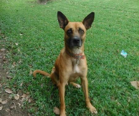 ***Bayer se une a la Red de Apoyo Canino y la Fundación Peluditos UCVenezuela para promover la posesión responsable de mascotas