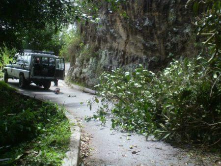 PC Los Salias despejó vía de La Peña Baja obstruida por árbol caído