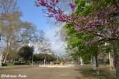 villa comunale alberi in fiore a primavera
