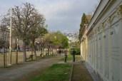 villa comunale casina pompeiana e nuovi alberelli