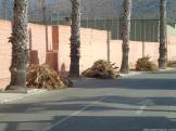 limpieaza-palmeras-urbanizacion-rio-verde-la-paloma-16-3