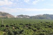 vega-rio-verde-almunecar-16-4