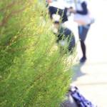 ふじみ野写真散歩の会 vol.1