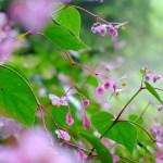 秋海棠と曼珠沙華と萩(秋・2)