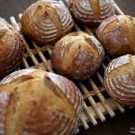 最近焼いたパンたち「ゆず酵母のミニカンパーニュ」「黒ひよこパン」「紅茶パン」