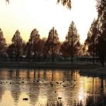 写真散歩・川越水上公園(その2)
