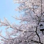 週末の写真さんぽお花見気分(ふじみ野・春2)