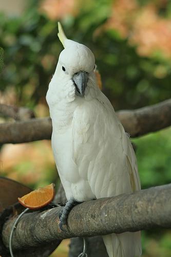 Gambar hisan: Beginilah lebih kurang rupa burung berkenaan.