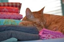sleepy kitty on my fabric