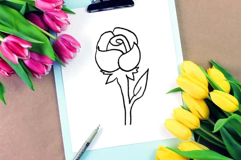 Rose Drawing How To Draw A Rose Step By Step For Beginners