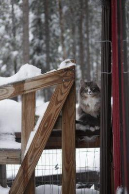 Petticoat outside in deep snow
