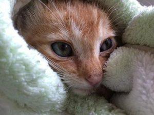 CB - foster kitten