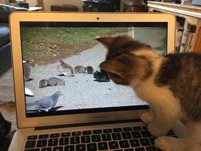You Tube has videos for cats to watch!
