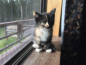 Foster kitten