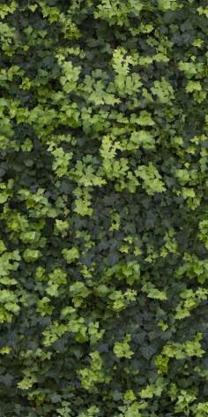 Casalgrande Padana Limpha leaf ceramic slab self cleaning