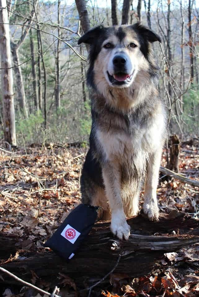 dog hiking essentials