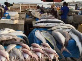 Dakar Fish Market