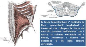 diastasi dei retti, fascia toracolombare, REPA