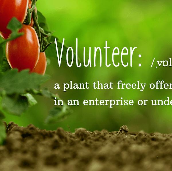 plants can volunteer too