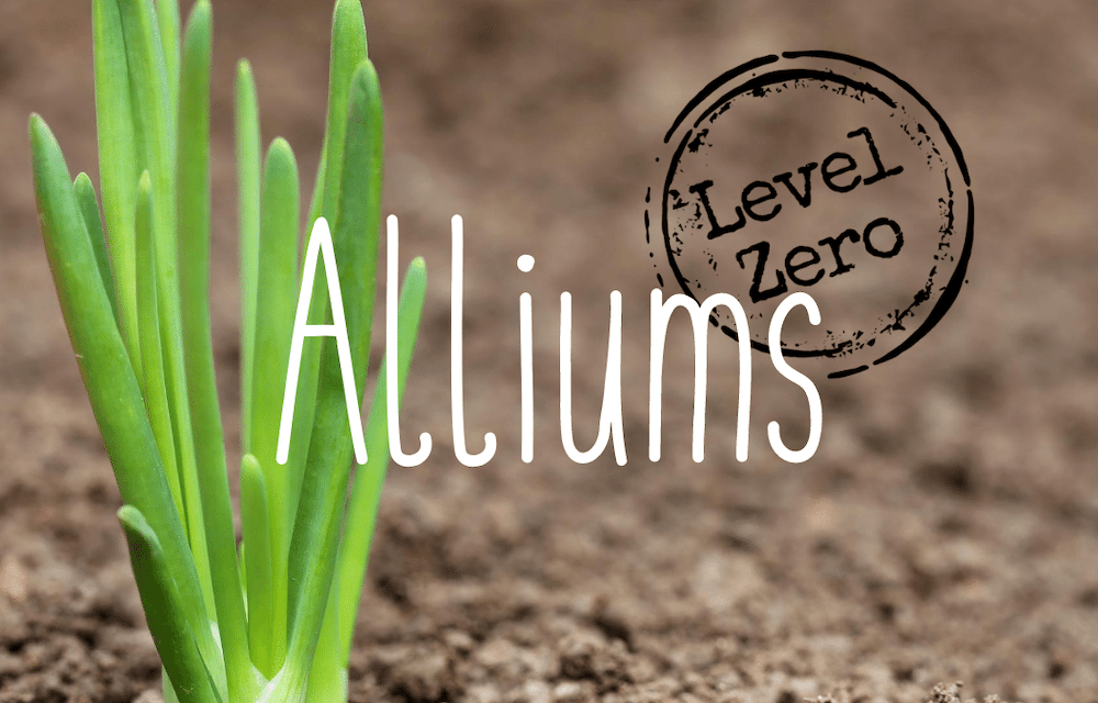 Level Zero Alliums