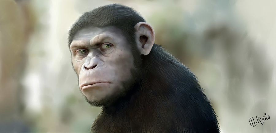 césar el origen del planeta de los simios por ragamuffyn