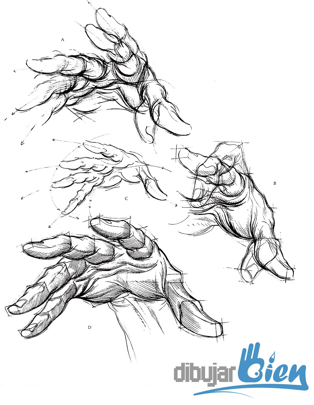 libros-para-dibujar-anatomia-burne-hogarth-manos - Dibujar Bien