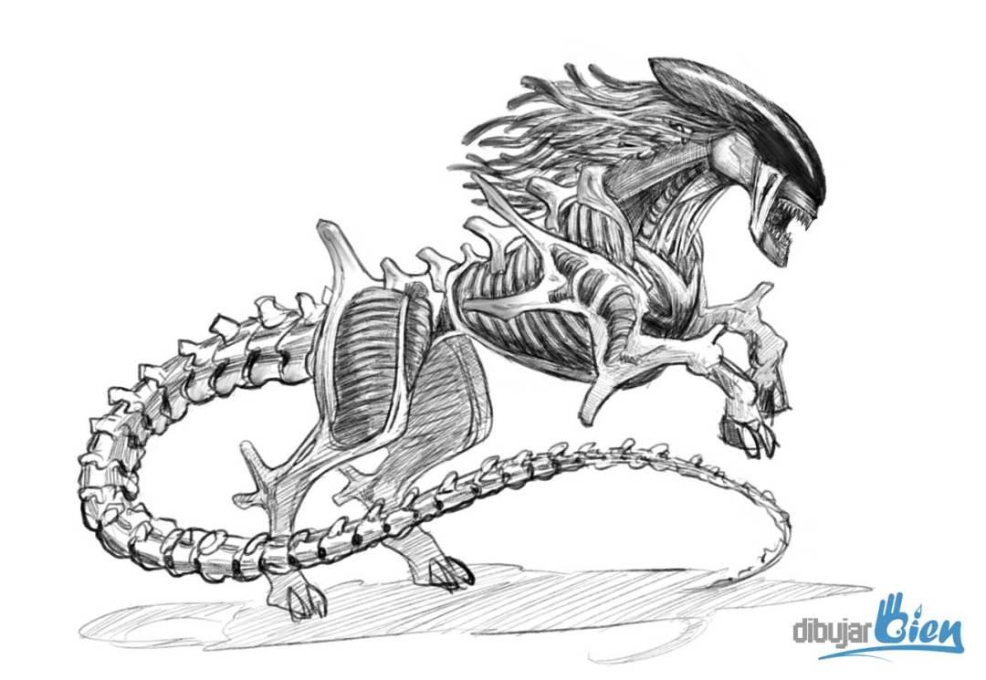 Dibujo De Caballos, Estudios Del Mundo Natural. Desafío
