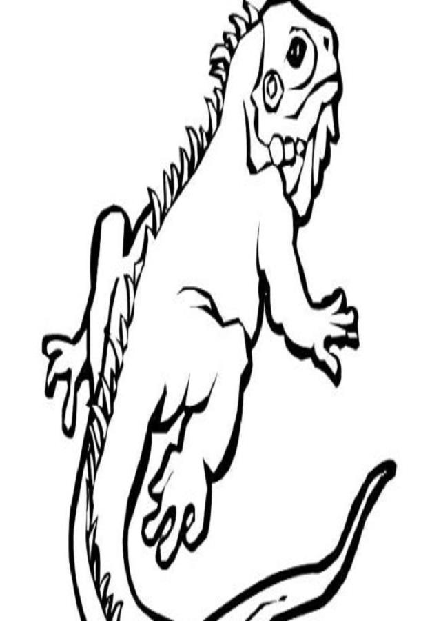 Iguana Para Dibujar Facil On Log Wall