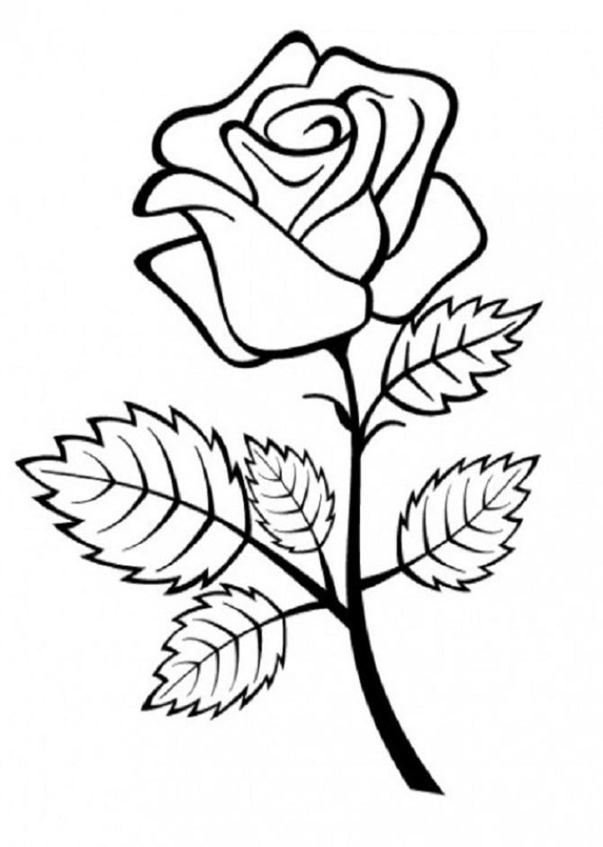 Imagen de una rosa para pintar