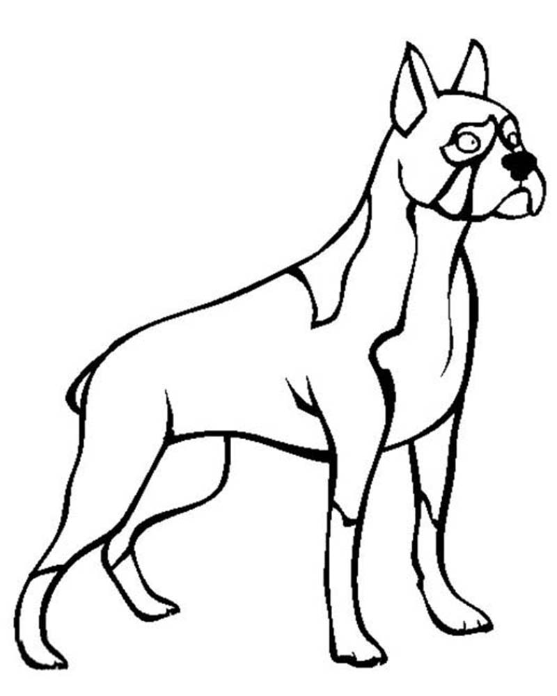dibujos para dibujar de perros boxer