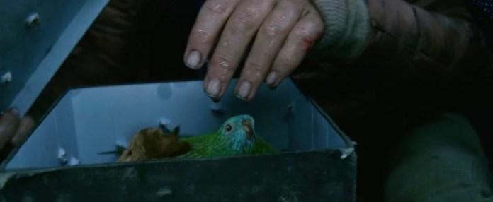 """Pássaros na caixa em """"Bird Box"""""""