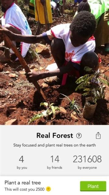 Imagem de uma criança plantando uma árvore.