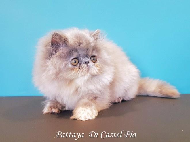 Pattaya Di Castel Pio 2019 (1000 sur 6)