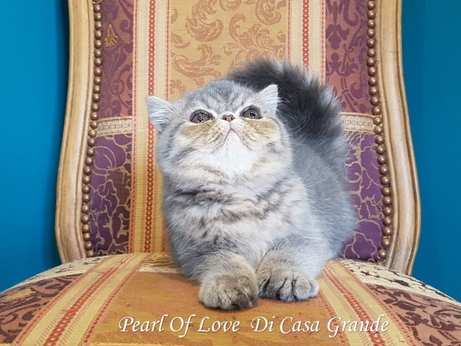 PEARL OF LOVE Di Casa Grande 2019 (1020 sur 28)