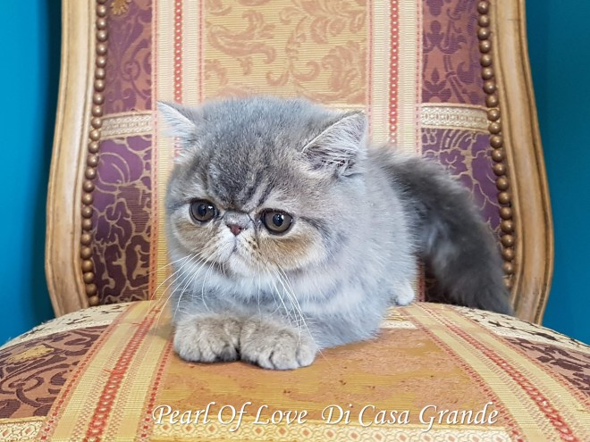PEARL OF LOVE Di Casa Grande 2019 (1026 sur 28)