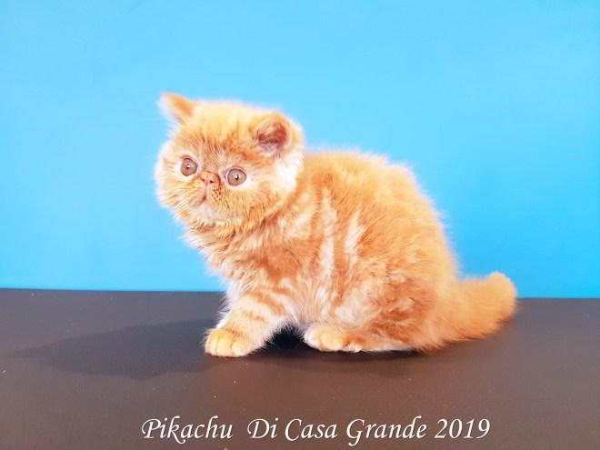 PIKACHU Di Casa Grande 2019 (13 sur 20)