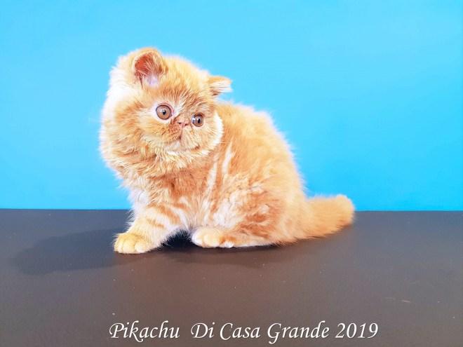 PIKACHU Di Casa Grande 2019 (14 sur 20)