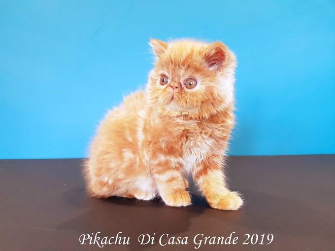 PIKACHU Di Casa Grande 2019 (2 sur 20)