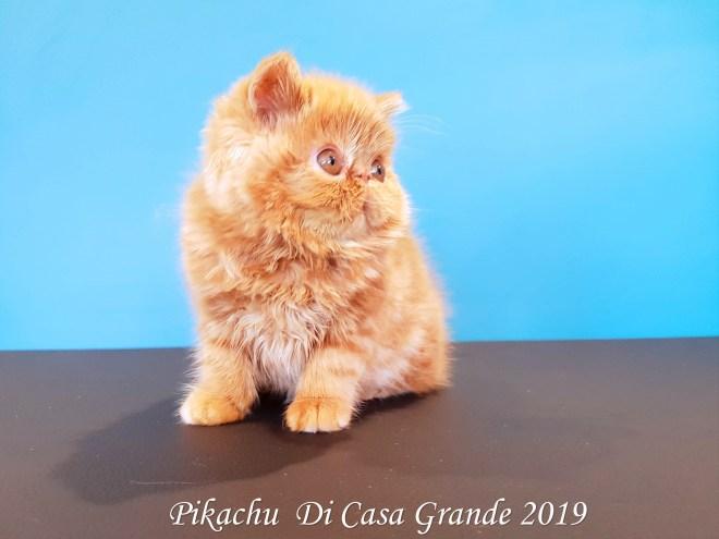 PIKACHU Di Casa Grande 2019 (7 sur 20)