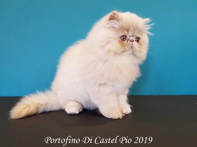 Portofino Di Castel Pio 2019 (109 sur 25)