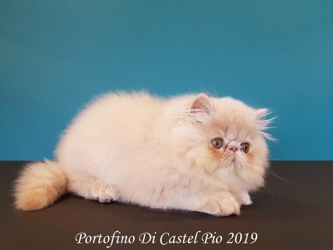 Portofino Di Castel Pio 2019 (111 sur 25)